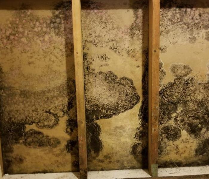 Mold Remediation 3 Ways To Manage a Mold Problem