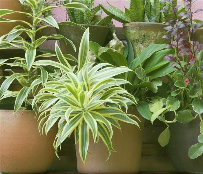 Mold Remediation Four Ways to Remove and Prevent Plant Mildew